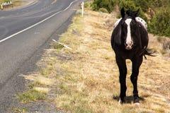 Wild häst i Kanjon de Chelly Arkivfoto