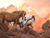 wild hästar Royaltyfria Foton