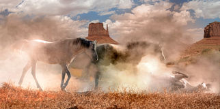 Wild hästar i dammet royaltyfria bilder