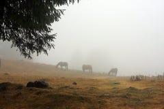 Wild hästar på berg Arkivfoto