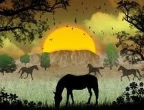 wild hästsolnedgång Royaltyfri Fotografi