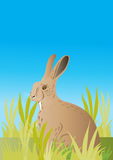 Wild hare in a meadow Royalty Free Stock Image