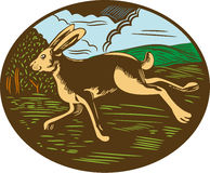 Wild Hare Rabbit Running Oval Woodcut Royalty Free Stock Images