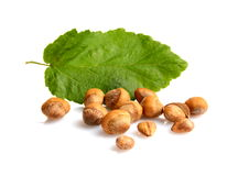 Wild hazelnuts with shell with leaf isolated Stock Photography