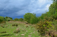 Wild heath land in Southern England. Royalty Free Stock Photography