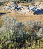 Wild heather in grassland with badlands formation Stock Photography
