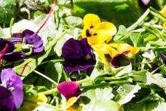 Wild herb salad fresh on the market. Green Stock Image