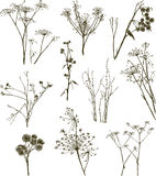 Wild herbal plants Royalty Free Stock Images