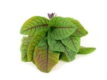 Wild herbs Stock Image
