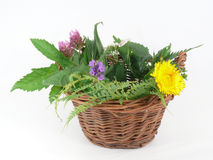 Wild herbs. Fresh wild and healthy herbs in the Basket royalty free stock photos