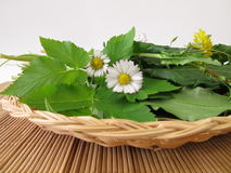 Wild herbs in basket Royalty Free Stock Photos