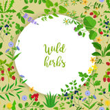 Wild herbs and berries circle frame. Wild herbs, flowers and berries circle frame. Vector illustration Royalty Free Stock Photos