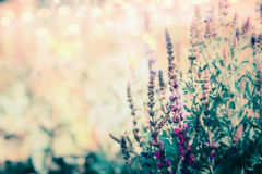 Wild herbs blooming , floral outdoor nature. Background stock images