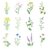 Wild herbs color set isolated. Wildflowers, herbs, leafs. Garden and wild foliage, flowers, branches vector illustration royalty free stock photo