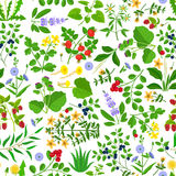 Wild herbs, flowers and berries pattern Stock Photos