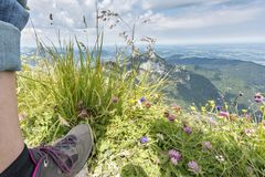 Wild herbs. In front of a mountain massif royalty free stock photo