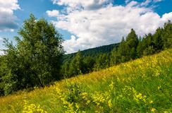Wild herbs on a hillside. Beautiful nature scenery in summer Royalty Free Stock Photography
