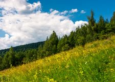 Wild herbs on a hillside. Beautiful nature scenery in summer Royalty Free Stock Photos