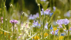 Wild herbs at natural park Cevennes, France stock footage