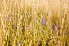 Wild herbs Royalty Free Stock Photos