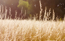 Wild herbs Stock Photo