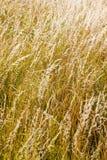 Wild herbs Stock Photography