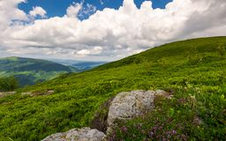 Wild herbs among the rocks in summer mountains. Wonderful scenery of Carpathian nature Stock Photo