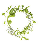 Wild herbs wreath on white background Royalty Free Stock Photo