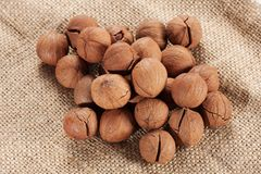 Wild hickory nuts Stock Photos
