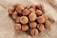Wild hickory nuts Stock Photos