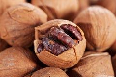 Wild hickory nuts Stock Photo