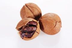 Wild hickory nuts. On white background Stock Image