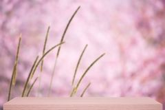 Wild himalayan cherry flower defocus background with shelf Stock Photo
