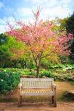 Wild Himalayan Cherry flower in garden Stock Photography