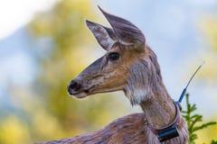 wild hjortar arkivfoton