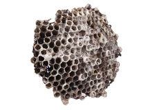 Wild honeycomb Stock Images