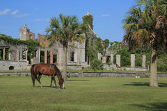 Wild Horse. At Dungeness Ruins on Cumberland Island National Seashore royalty free stock photo