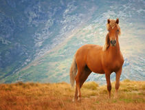 Wild horse. In Stara planina mountine in Bulgaria