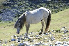 Wild Horse Stock Photography