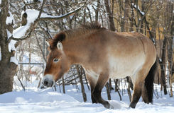 Wild Horse Stock Photography