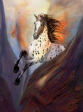 Wild Horse 2. A galloping wild horse! In this picture you will find power and vigor Stock Photos