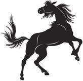 Wild horse Stock Image