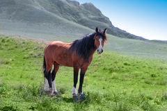 Wild horse animal. Nature grass Royalty Free Stock Photography