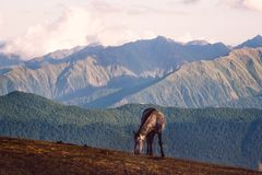 Wild horse and beautiful mountain landscape in Svaneti, Georgia Royalty Free Stock Photography