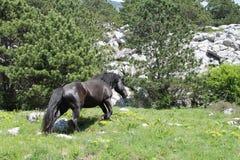 Wild horse on Biokovo mountain Stock Photos