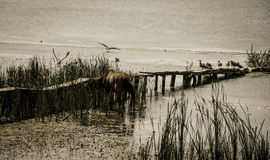 Wild horse and birds sitting in a pond with an old bridge sinking stock photo