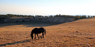 Wild Horse Black Mare on Sykes Ridge above Teacup Bowl in the Arrowhead / Pryor Mountains  in Montana – Wyoming Stock Photo