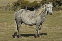 Wild Horse on the field Royalty Free Stock Images