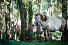 Wild horse in forest Stock Image