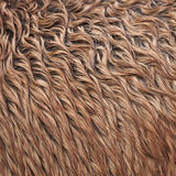 Wild horse fur. Close up view of a brown wild horse fur Stock Image